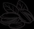 ilustracion pistachos